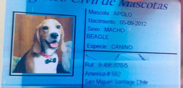 Conoce el nuevo Registro Civil, pero ¡de mascotas!
