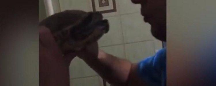 Intentó besar a una tortuga y se llevó una dolorosa lección