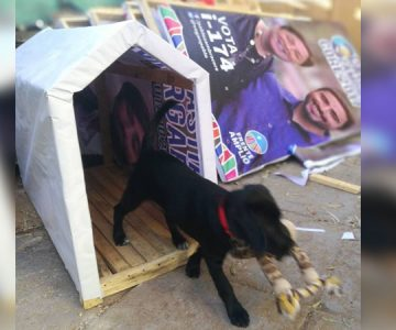 CORE electo convirtió su propaganda en casas para que perros callejeros puedan dormir