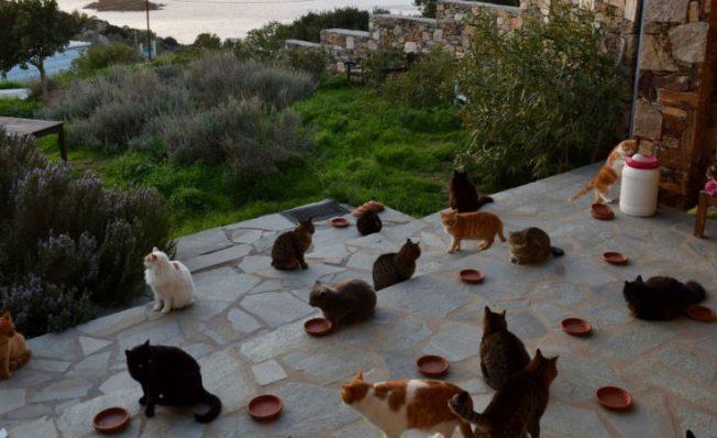 Ofrecen alojamiento y 370 mil pesos mensuales por cuidar gatos en una isla