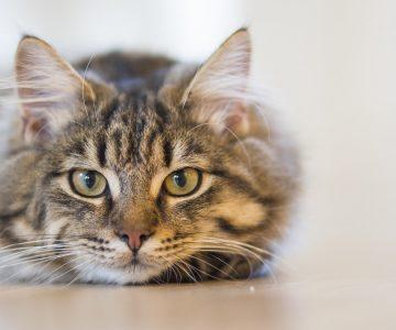 Gato vivaracho queda en shock cuando se da cuenta que tiene orejas