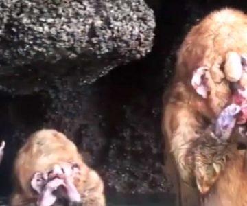 Esta es la verdad de las criaturas que aparecieron en una cueva tailandesa