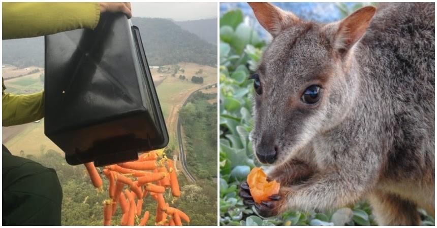 Australia Animales