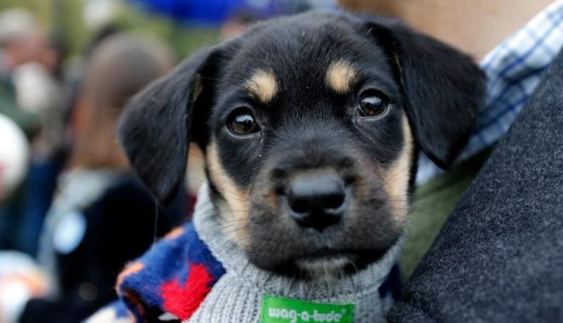 Perritos Adopción