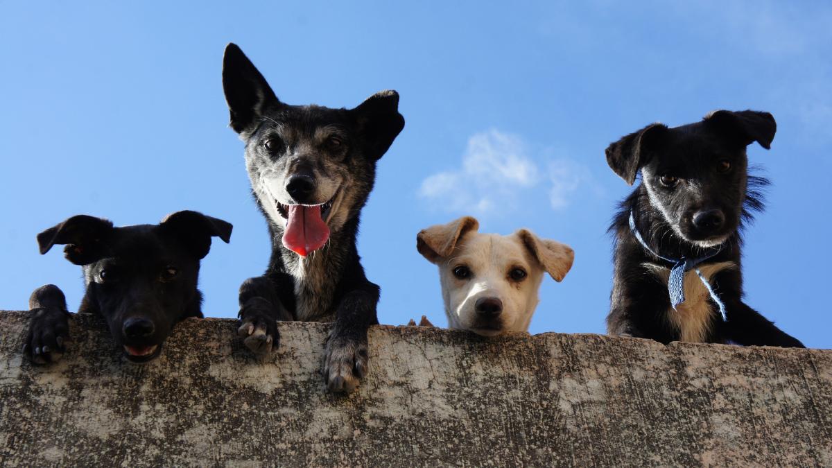 Mascotas En Cuarentenas (fuente_ Foto De Eddie Galaxy En Pexels)