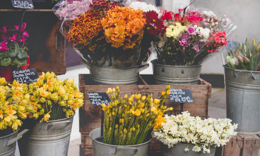 Flores. (Fuente: Pexels)