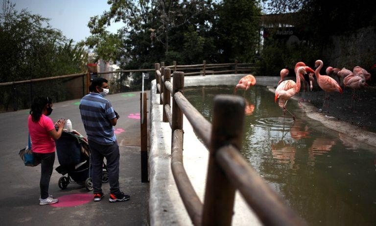 Buin Zoo Y Zoológico Metropolitano
